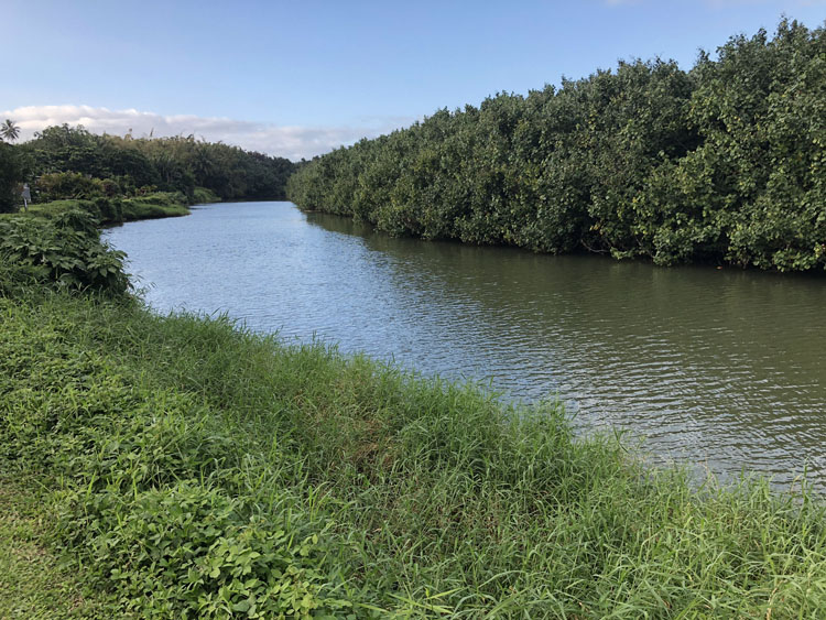 The Hanalei River